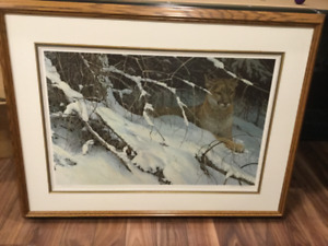 Robert Bateman Print - Cougar in the Snow