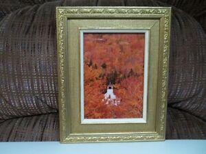 "Frame And Photo ""Autum In Vermont"""