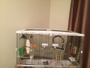 2 Budgies with cage - Just in time for Christmas.