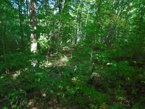 10 Acres on Berry rd in Kaladar, what a deal!!!