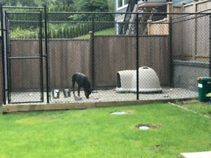 DOG KENNEL FENCING - MUST GO!