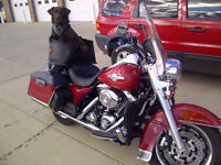 2008 Road King Firefighter Special Edition in Pincher Creek
