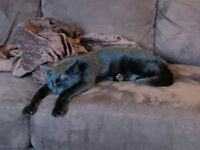 Young Male Cat Needs a Loving Home