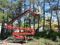 Tree Removal.. Safe Is Very Affordable w/ Best Equip. In Town!