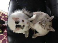 """4 month old """"kittens"""" free need home asap"""