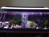 Clear seal 130L FISH TANK WITH OVER 40 Fish setup and stand