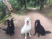The DogFather Dog Walking, Pet Sitting and Pet Drop ins Service Mid and East Lothian