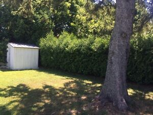 Professional hedge trimming and pruning Kingston Kingston Area image 3