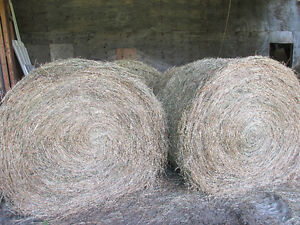 large 5 x 5 alfalfa/mix  hay bales
