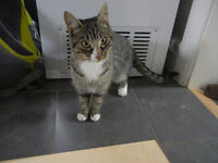 Beautiful 1 1/2 year old cat for sale