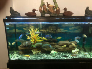 90 Gallons Fish Tank with Fish included