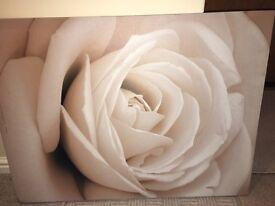 Large Cream Rose Canvas