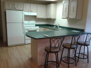 One large bedroom basement apartment with everything included