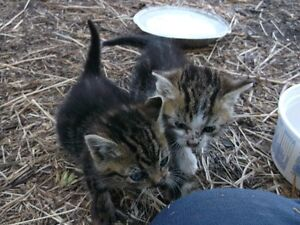 Two Kittens Found with No Mother - FREE
