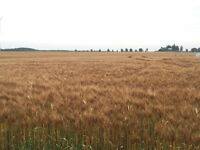 Looking to buy 300 to 500 acres