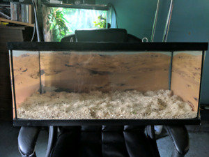 30x12x12 Reptile Enclosure with locking pins and desert backgrou