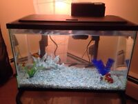 5.5 Galons Full Set Fish Tank
