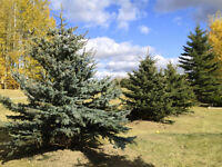 Trees Available!!! Be the first to plant in Spring!!!