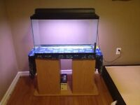30 gallon aquarium or terrarium and stand