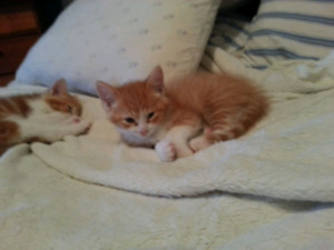 2 free kittens/ 2 chatons a donner