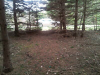 Beautiful lots with mature trees