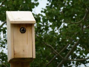 bird house for tree swallow hirondelles, merles bleus, mesanges