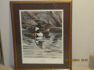 Framed Print - Ducks Unlimited - Hooded Mergansers