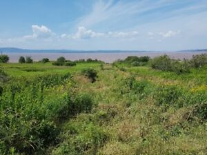 Beautiful 7+/- Acres on Shepody Bay