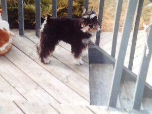 Lost Dog  in Ranchlands