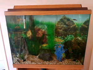 29 Gallon Fish tank, stand, fish and accessories **PRICE REDUCED