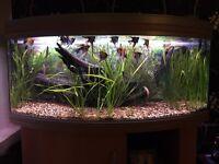 200l fish tank set up