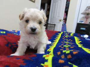 Adopt Dogs Puppies Locally In Halifax Pets Kijiji Classifieds