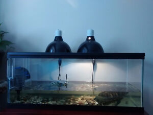 Turtle Tank kit with Turtle  $100.00