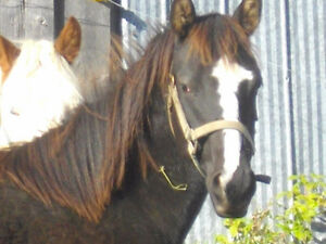 2 sweet geldings looking for a loving home