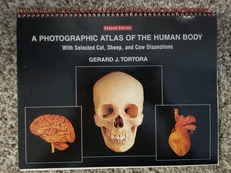 Magnificent A Photographic Atlas For Anatomy And Physiology Pattern ...