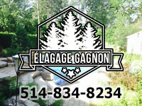 ÉLAGAGE – ÉMONDAGE – TAILLE DE HAIE – 514.834.8234.