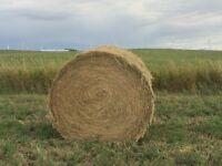 2nd cut alfalfa