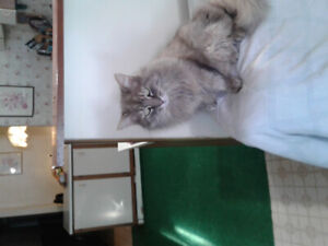 Miss Mew, missing since October 28, 2018.  Missing from Thornhil