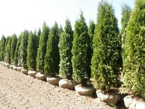 Trees Shrubs Perennials and Much Much More