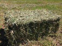 SMALL SQUARES HAY BALES - 2015 FIRST CUT