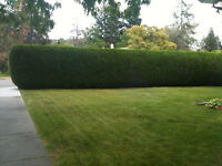 ALL EXTERIOR HEDGE &TREE SERVICE 250-212-1716
