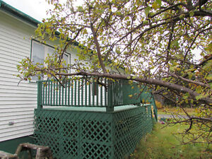 JUST LISTED…1.58 ACRE ESTATE..1 OWNER BUNGALOW...AVONDALE. St. John's Newfoundland image 6