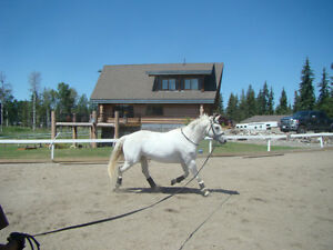 JemDstables Ranch, Williams Lake 19+Acres