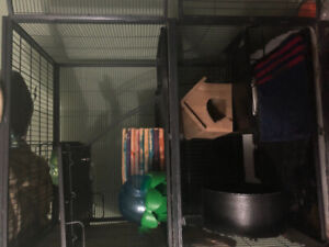 Ferret Nation cage and supplies