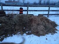 Horse manure - Free