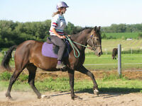 Hypo-allergenic Curly Horse Mare for sale - Trained!