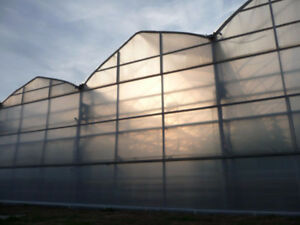 Diffused 8 mil Greenhouse Vinyl (40% of light passing through)