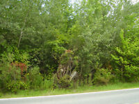 Treed 2 Acre lot IN TOWN