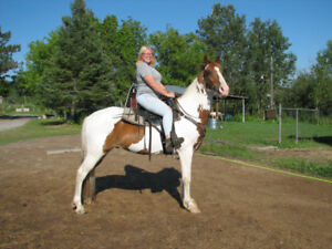 Trail Horses for Sale -  Trained for Trail Riding