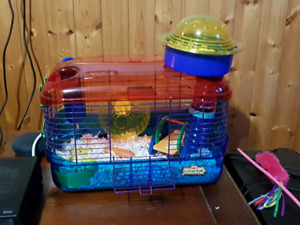Female short hair syrian hamster with cage and ball